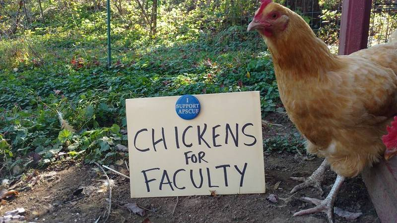 Poultry Protesting Patronizing People.jpg