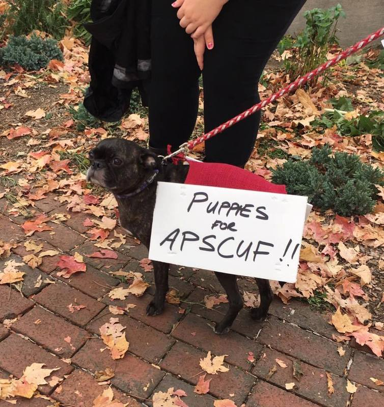 Puppies for APSCUF.jpg