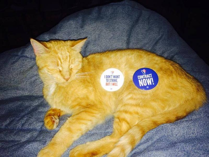 Two Pins, for the Price of a Cat.jpg