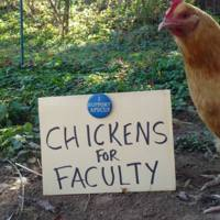 Poultry Protesting Patronizing People