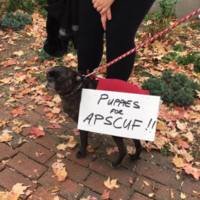 Puppies for APSCUF